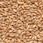Солод Пшеничный